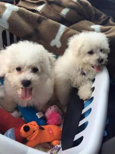 Real Estate Broker Bloomington IN - Puppies PJ and Oliver
