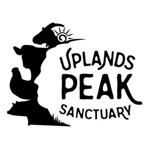 Deb Tomaro - REAL Real Estate Today - At Home in Bloomington - Episode 45 - Uplands PEAK Sanctuary